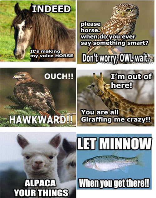 Lame And Funny Jokes