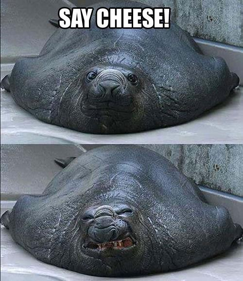 Funny Picture - Say Cheese!