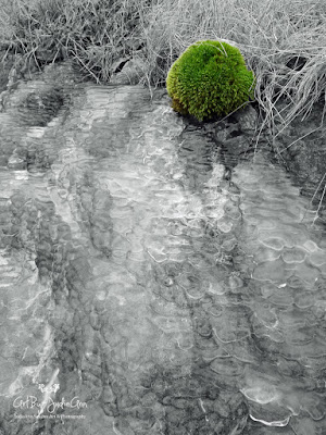Mound Of Moss On Ice