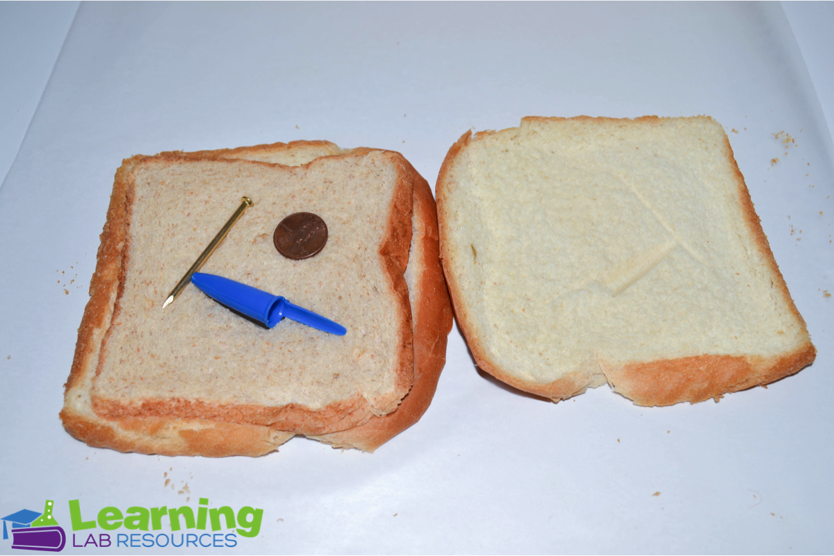 "Have your students learn about fossils and sedimentary rocks by doing this easy ""rock sandwich"" science lab."