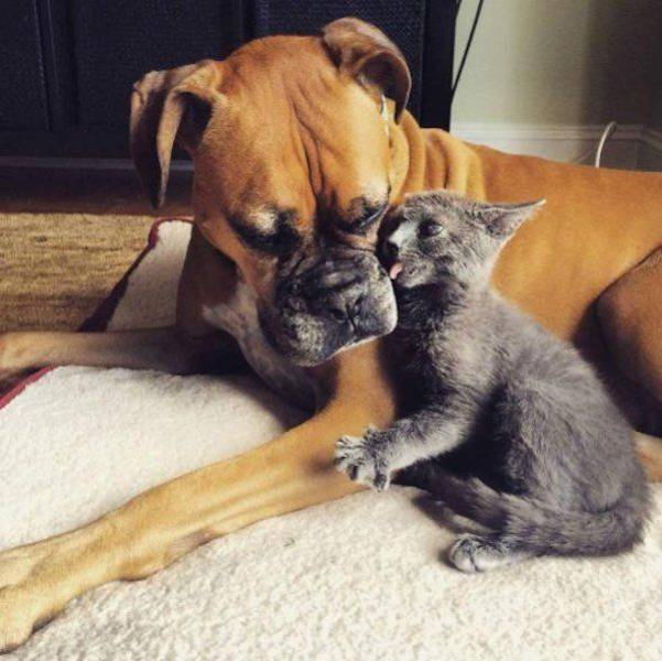 Funny animals of the week - 10 February 2017, cute animal images, best funny animal photo