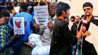 """Politicians should protest in future, not people""-Marina protester | Jallikattu"