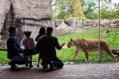 kandang singa di kebun binatang