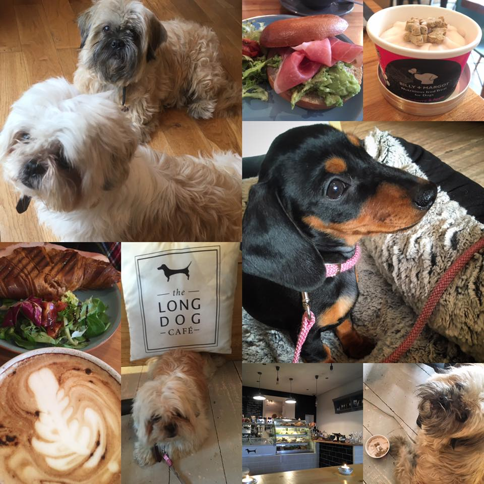 Dog Friendly places to Eat in Aberdeen | Foodie Quine