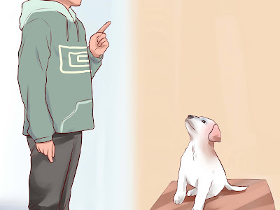 Preparing Your Dog Humanely: Part One