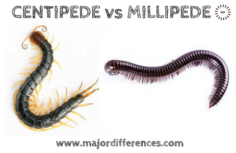 Difference Between Centipedes And Millipedes Centipedes Vs