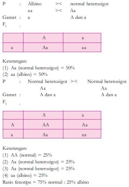 Pengertian dan Contoh Persilangan Dihibrid dan Monohibrid dalam Ilmu Genetika