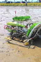 bibit tanaman,modernisasi,mesin,padi,budidaya tanaman,lmga agro