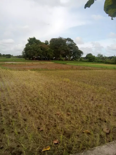 Duka Petani Kebumen Usai Banjir Sepekan