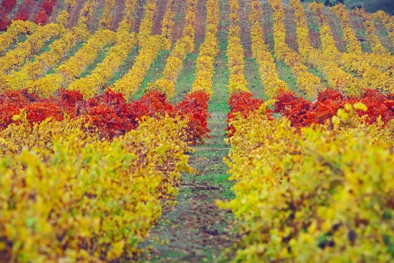 falta de erección de la región vinícola