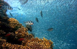 5 Tempat Menyelam Terbaik Di Indonesia