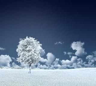 Fotografía de paisaje azul y blanco con árbol