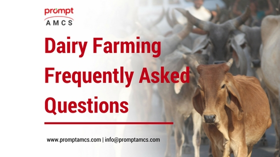Dairy Farming Frequently Asked Questions