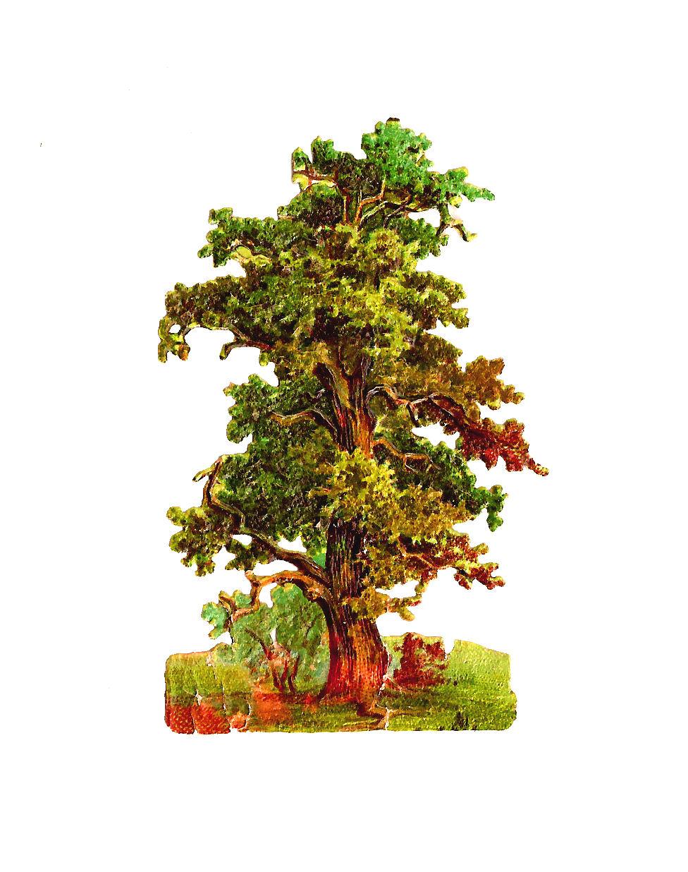 Free Tree Graphic Vintage Oak Clip Art