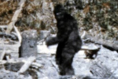 Sasquatch Werewolf