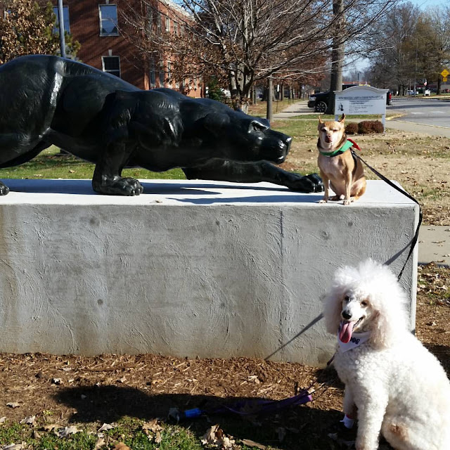 poodle and chihuahua with panther statue