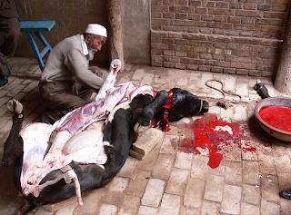 Islam vs Barat: Penelitian Buktikan Cara Menyembelih Hewan secara Islami lebih Baik