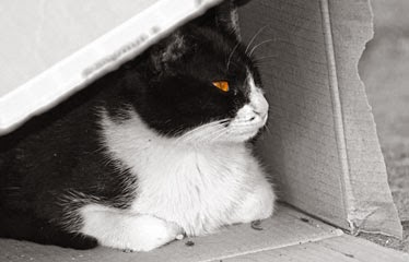 El gato de hikiko en una caja como casa