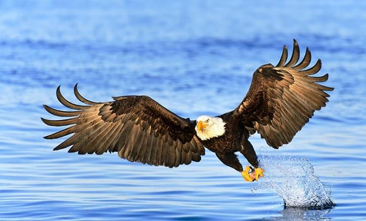 610 Koleksi Gambar Burung Elang Raksasa Gratis Terbaru