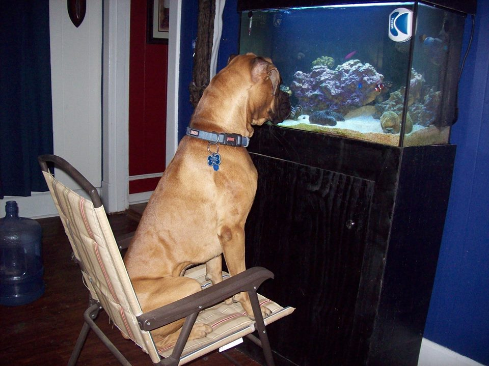 k@This is Leonardo. He found a new hobby: fish watching.