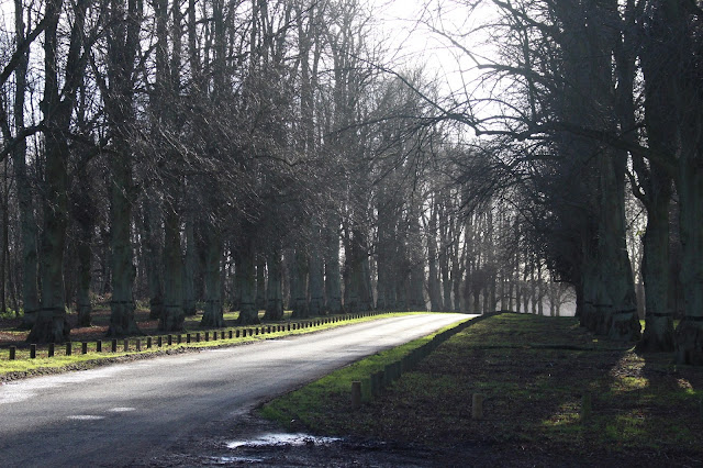 Lime Tree Avenue, Clumber Park