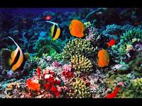 Keindahan alam laut Kepululauwan Raja Amapt