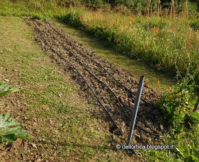 amarene e orto della fattoria didattica dell ortica a Savigno Valsamoggia Bologna vicino a Zocca nell Appennino