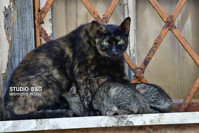 Η φωτογραφία της ημέρας: Ο δημόσιος μητρικός θηλασμός της...γάτας!