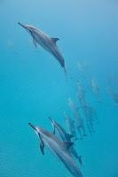 http://www.tropicallight.com/water/dolphins/26nov18dolphins/26nov18dolphins.html