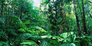 Habitat Tumbuhan dan Hewan