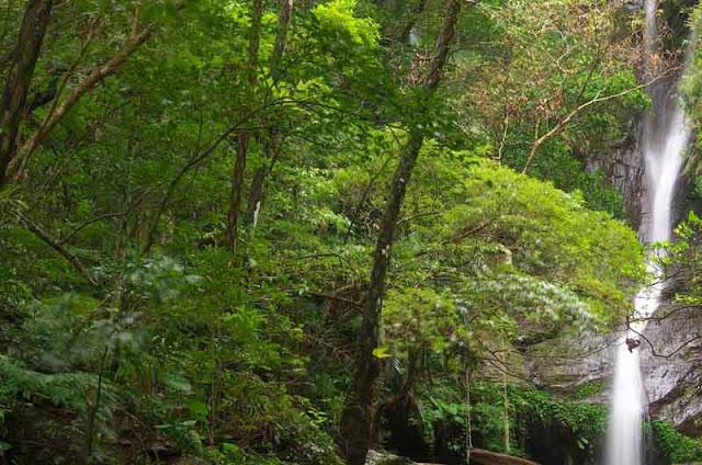 Fukugawa Falls, vegetation