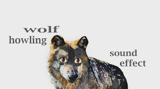 how wolf sounds