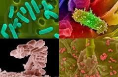 Bakteri Kencing Nanah