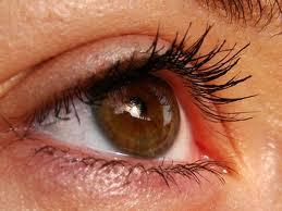 أفضل 6 أطعمة لصحة العينين وتقوية الإبصار