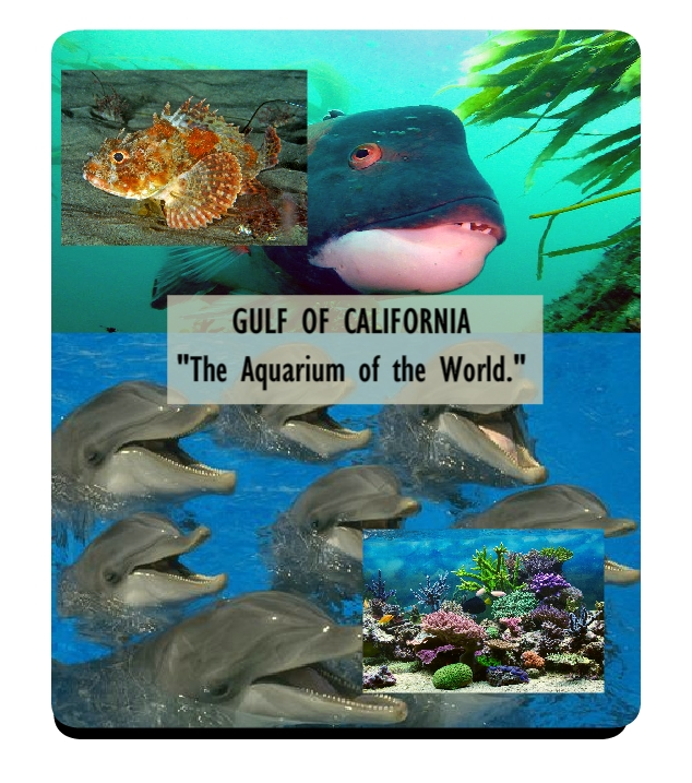 bio-diversity of gulf of california