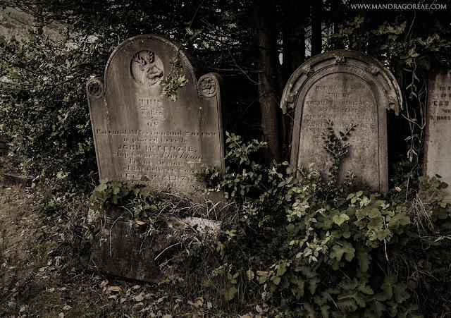 Plockton Burial Ground Graves, Mandragoreae