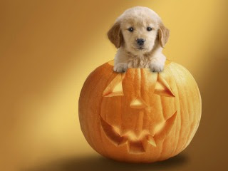download besplatne slike za mobitele Halloween Noć vještica bundeva