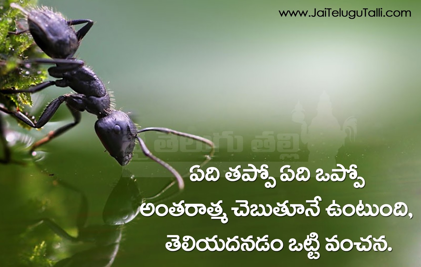 The Best Telugu Quotes On Life With Images Hd Quotes On Newstesmasi