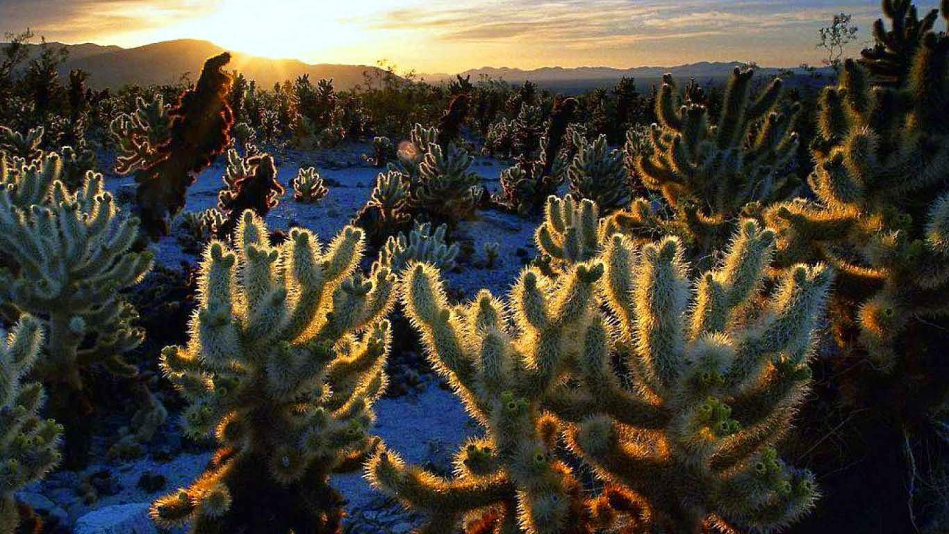 lovely-desert-images