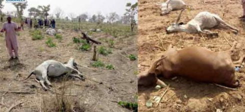 tiv farmers attack fulani village