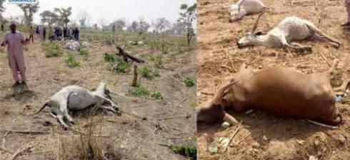 tiv farmers attack fulani village