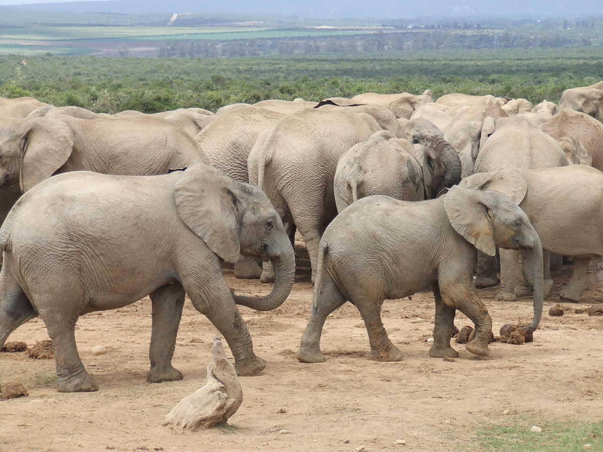 Beautiful African Animals Safaris: May 2012