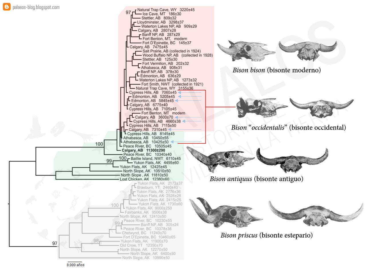 Palaeos, la historia de la Vida en la Tierra: ¿Son los fósiles ...