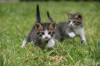 kucing Suka mengikuti kita