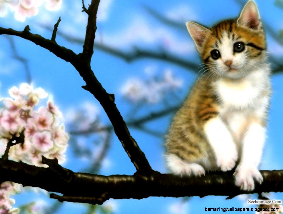 Super Cute Baby Kittens | Amazing Wallpapers