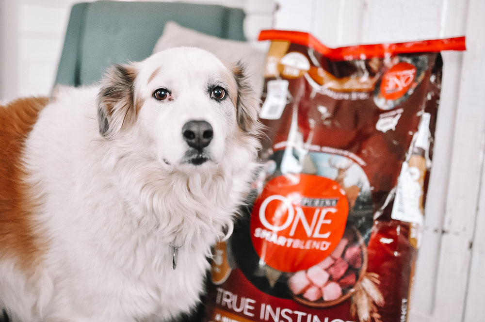 Amanda Martin's Great Pyrenees Mix, Chloe, is excited to take the Purina 28 Day Challenge