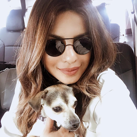 Happy Birthday Priyanka Chopra - 8 Pics of Desi Girl with Puppy That Makes Us Awwwwwwwww