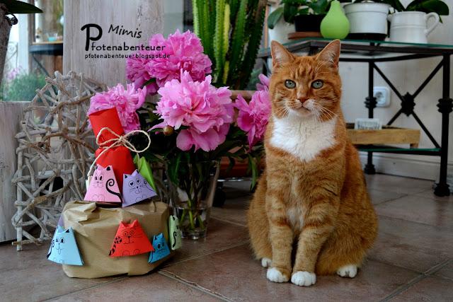Katze Mimi mit einer Papiertorte