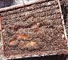Διάφραγμα Σνέλκροφ. Για δυνατά μελίσσια και πολλά μέλια!