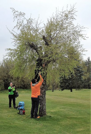 Herbert im Baum